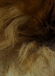 Creating complex HTML email signatures in Mail.app for Mac OSX Lion